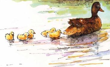 kinderliedjes alle eendjes zwemmen in het water